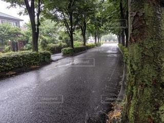 雨の道の写真・画像素材[2181029]