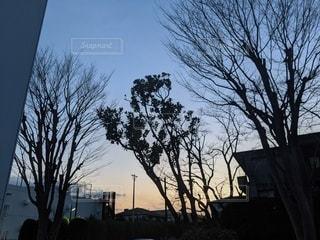 木のクローズアップの写真・画像素材[3023644]