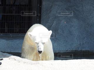 動物園の写真・画像素材[615739]