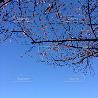 自然の写真・画像素材[278331]