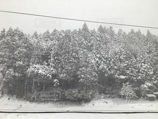 No.311932 冬
