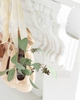 植物の写真・画像素材[4210]