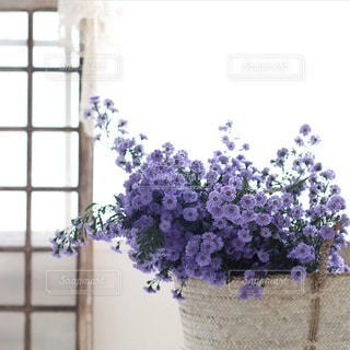植物 - No.4199