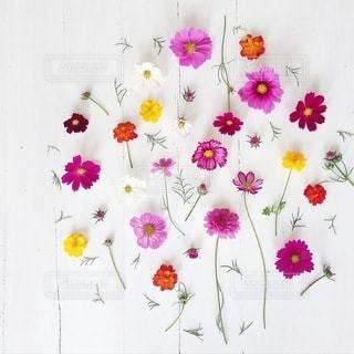 植物 - No.4188