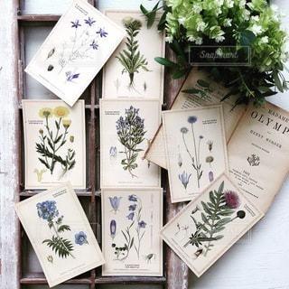 植物の写真・画像素材[4183]