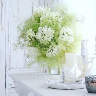植物 - No.4181