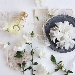 植物の写真・画像素材[4172]