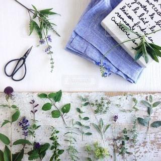 植物の写真・画像素材[4164]