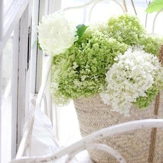 花の写真・画像素材[4162]