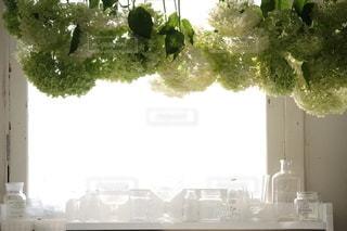 植物の写真・画像素材[4157]