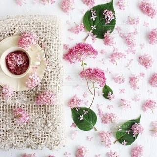 花の写真・画像素材[4152]