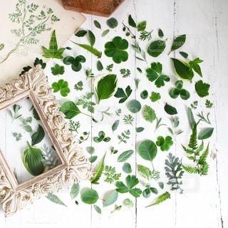 植物の写真・画像素材[4150]