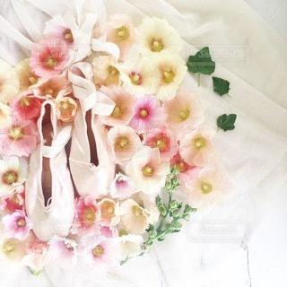 花の写真・画像素材[4148]