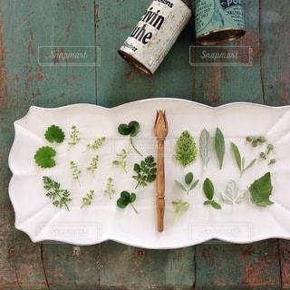 植物の写真・画像素材[4144]