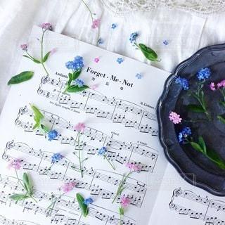 花の写真・画像素材[4142]