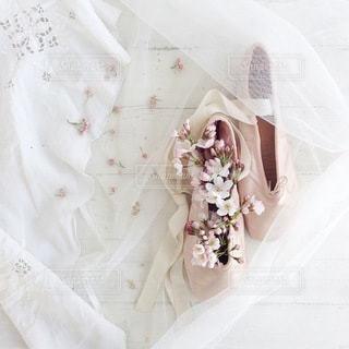 桜の写真・画像素材[4134]