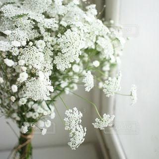 花の写真・画像素材[4129]