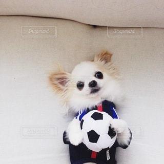 犬の写真・画像素材[4125]