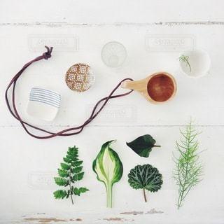 植物の写真・画像素材[4121]