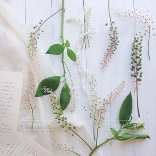 植物の写真・画像素材[4105]