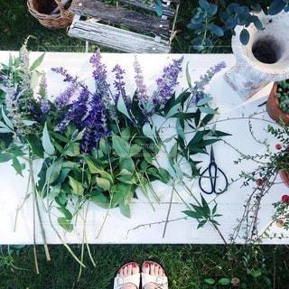 花の写真・画像素材[4101]