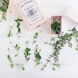 花の写真・画像素材[4099]