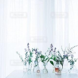 植物 - No.4097