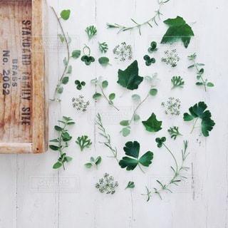 植物の写真・画像素材[4095]