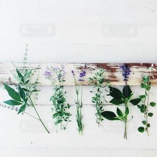 花の写真・画像素材[4094]