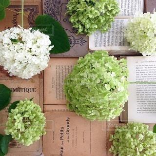 花の写真・画像素材[4092]