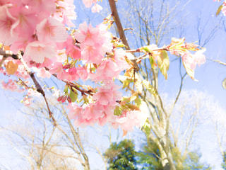 花の写真・画像素材[347755]