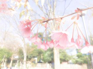 樹木の写真・画像素材[347756]
