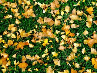 秋の写真・画像素材[279130]