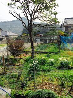 庭の写真・画像素材[280330]