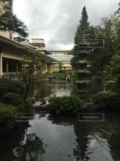 庭の写真・画像素材[280332]