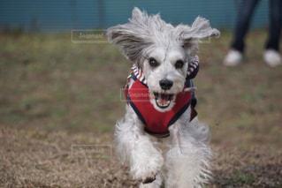 犬の写真・画像素材[279150]