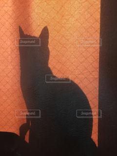 猫の写真・画像素材[279368]