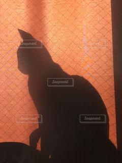 猫の写真・画像素材[279370]