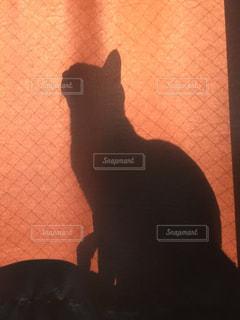 猫の写真・画像素材[279381]
