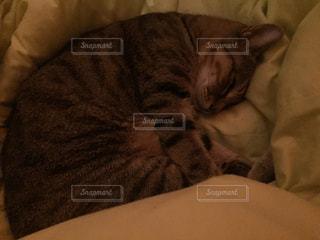 猫の写真・画像素材[279542]