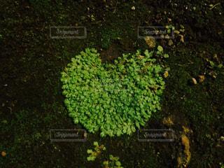 自然の写真・画像素材[283816]
