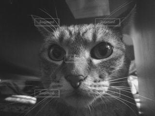 猫の写真・画像素材[283831]