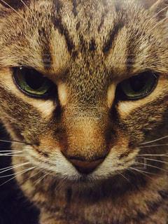 猫の写真・画像素材[283839]