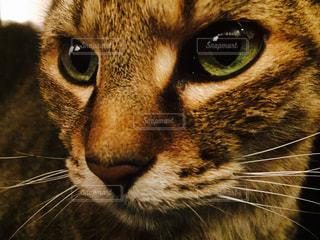 猫の写真・画像素材[283840]