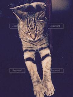 猫の写真・画像素材[283842]