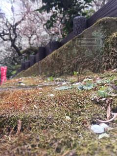 春の写真・画像素材[360156]
