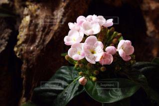 花の写真・画像素材[316382]