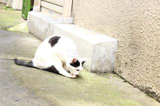 猫の写真・画像素材[316385]