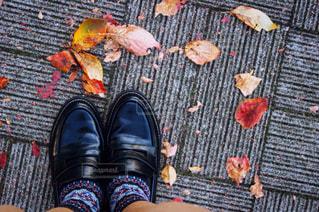 秋の写真・画像素材[316390]