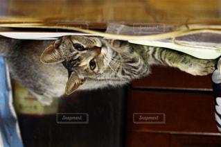猫の写真・画像素材[317064]